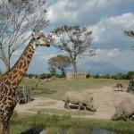 アフリカ園 サイ キリン